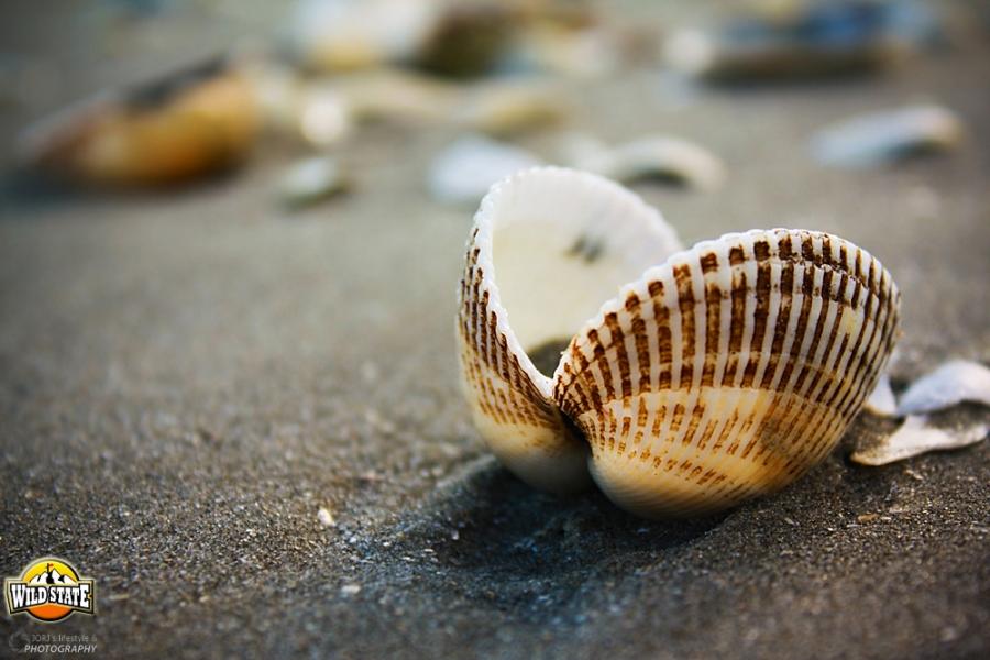 Plaja salbatica de la Corbu: Detalii