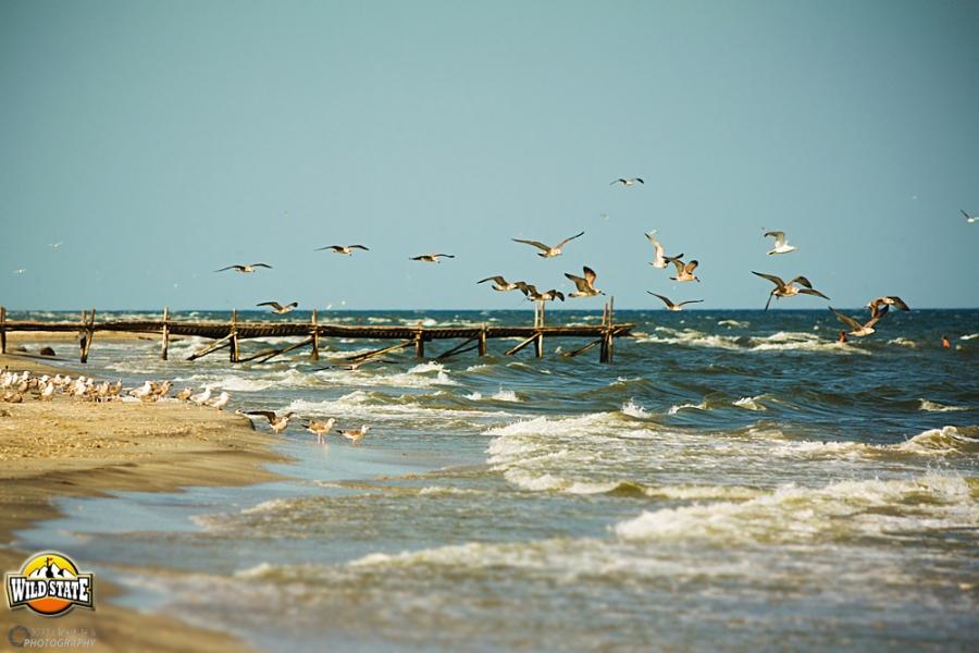 Plaja salbatica de la Corbu: spre Vadu