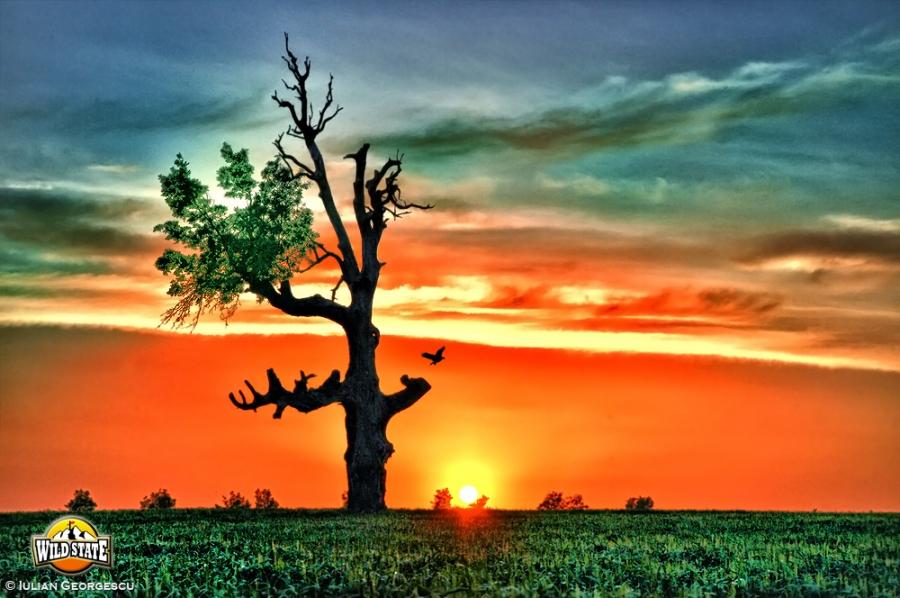Spre copac